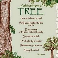 advice from a tree. stand tall and proud sink your roots into the earth be content with your natural beauty go out on a limb drink plenty of water remember your roots enjoy the view! Life Quotes Love, Family Quotes, Tree Quotes, Quotes About Trees, Advice Quotes, Wisdom Quotes, Nature Quotes, Earth Day, Good Advice