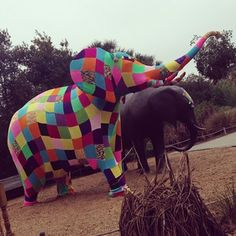 This fly-as-heck elephant in Florida. | 29 Times Yarn Graffiti Made The World A Better Place