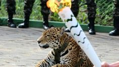 A jaguar trotted out for the Olympic torch's passage through Brazil's Amazon was killed shortly afterward when it escaped its handlers and threatened a vet, the Brazilian military said Tuesday.