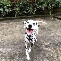 Dalmatian baby!