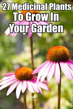 27 Medicinal Plants To Grow In Your Garden