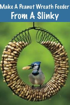 Bird feeder made out of a slinky and peanuts!