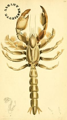 v 3 (1817) - The zoological miscellany : - Biodiversity Heritage Library
