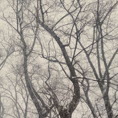 #snowmageddon2016 #winterishere #whereareyouspringtime by authorbeckymuth