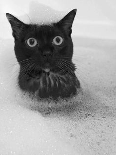 Funny Cat #cats, #pets, https://facebook.com/apps/application.php?id=106186096099420