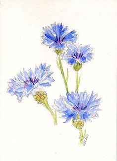 Cornflowers Painting by Stephanie Grant