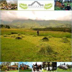 Hacienda Cochauco Ecuador - MCM Design