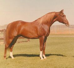 orzel, world class champion in multiple disciplines and flat racing star.  picasso's grandsire.