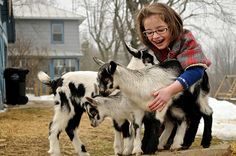 In late December of 2009 I brought a pregnant Alpine goat home in the back of my small hatchback.  In late February of 2010, she gave birth to three bucklings, and I began my life as a milkmaid. Go...