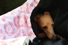 Wintage Bag - Gone With The Hound Fluffy Dogs, Italian Greyhound, Animal House, Sleeping Bag, Bag Making, Cosy, Plush, Delicate, Cool Stuff