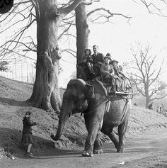 old pictures of dublin zoo - rides on the back of sarah Dublin Zoo, Dublin City, Dublin Ireland, Old Pictures, Old Photos, Vintage Photos, Elephant Ride, Ireland Homes, Photo Engraving