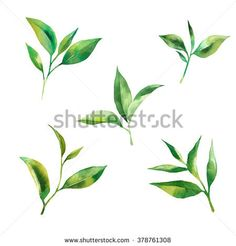watercolor set with tea leaves on white background