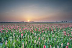 sunrise at Lisse by Nathalie Stravers on 500px