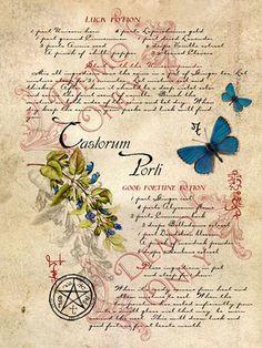 BOS ~ Castorum page