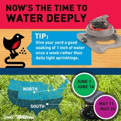 Tip: Give your yard a good soaking of 1 inch of water once a week rather than daily light sprinklings.