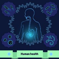 Energize Vibrant Health in & via Your Gut Flora with Microbiome Boost Flora Intestinal, Candida Albicans, Healing Words, Biomes, Reduce Inflammation, Autoimmune, Awakening, The Fosters, Phoenix