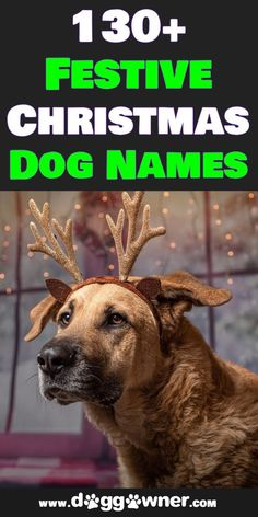 There are hundreds of Christmas dog names suitable for almost any breed out there, but for your sake, we narrowed it down a bit. So take a look at some of our favorites! #christmasdognames #dognames