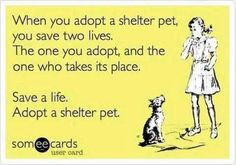 Don't Forget. I can't imagine going out and spending a ridiculous amount of money on a dog (that more than likely came from a puppy mill) when there are such sweet angels waiting for their forever home at the shelter.
