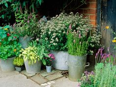 best herbs for containers - Google Search
