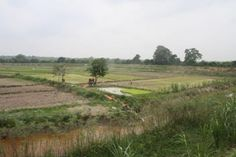 sumatran farmland - Google 検索