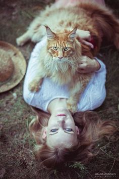 Now that's a Maine Coon! http://www.mainecoonguide.com/where-to-find-maine-coon-kittens-for-sale/