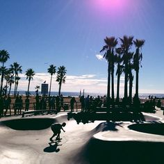 Just hangin' in Venice Beach. Photo courtesy of rizaidolkill on Instagram.