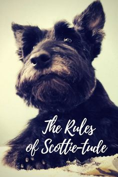 The Rules of Scottie-tude