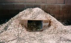 Russian Tortoise Diet Guide / Helpful Tips And Tricks Tortoise Habitat, Tortoise Care, Tortoise Food, Tortoise House, Turtle Habitat, Tortoise Enclosure, Turtle Enclosure, Arizona, Home