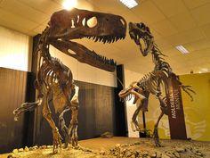 "Herrerasaurus (""Frenguellisaurus"") ischigualastensis. Late Triassic. San Juan. Argentina"
