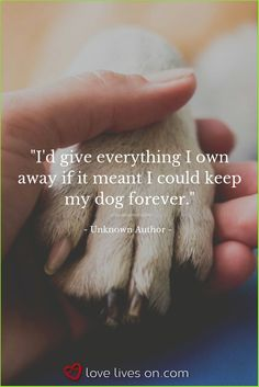 "Beautiful Loss of Pet Quotes - "" You are in the right place about trends men Here we offer you the most beautiful pictures abou - Pet Quotes Dog, Pet Loss Quotes, Animal Quotes, Dog Quotes Love, Death Of Dog Quotes, Quotes About Animals, Quotes About Dogs, Dog Qoutes, Pet Loss Grief"