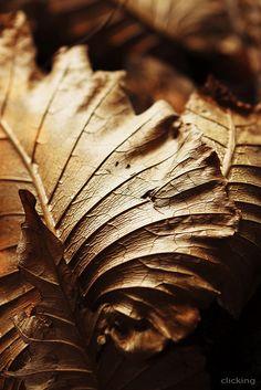 """""""... Mùa thu vàng, mùa thu của xa xôi Tôi lấy tên em đặt tên cho nỗi nhớ Một nỗi nhớ dịu dàng như hơi thở Và em trở thành mùa thu của riêng tôi. """"  Trích bài thơ CHO MÙA THU XƯA của Nguyễn Thị Diệp Nga"""