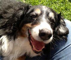 Our dog Toby. Mark and Olga, Corona, CA 8/15/2015