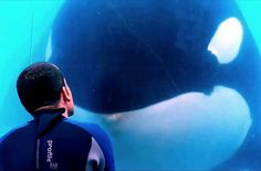 Blackfish - Official Trailer (HD) Documentary, Orca http://blackfishmovie.com/ AVAILABLE ON: http://www.netflix.com/