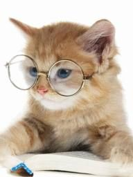 Adorable professor kitten
