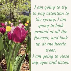 I am going to close my eyes and listen Anne Lemott Nature Photography, Spring Photography, Close My Eyes, Pay Attention, Looking Up, That Look, Prague, Flowers, Plants