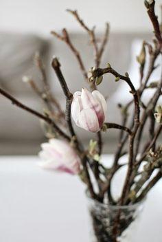 Kuistin kautta: Magnoliahulluus | magnolia