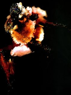 bjork and the sequin explosion