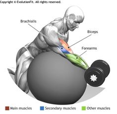BICEPS -  SEATED STABILITY BALL CONCENTRATION DUMBLLE CURL