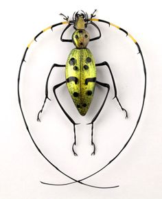 Cesare Toffolo - the artist, not the beetle - lampwork bugs. Can you believe this amazing glasswork! Beetle Insect, Beetle Bug, Insect Art, Cool Insects, Bugs And Insects, Weird Insects, The Beetles, Mantis Religiosa, Foto Macro