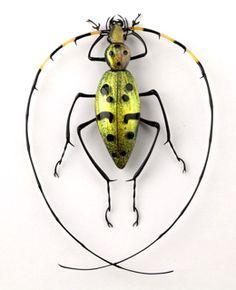 Cesare Toffolo - lampwork bugs.
