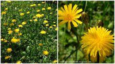 Kraut, Plants, Lawn, Nature, Plant, Planets