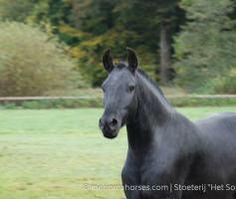 Salina | Menorca Horses
