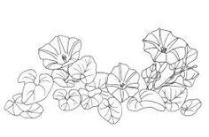 Dessin de gentiane bleue recherche google fleurs de savoie pinterest searching - Coloriage fleur gentiane ...