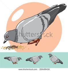 Vector pigeons. Illustration