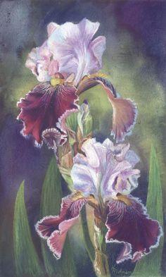Pastel Iris