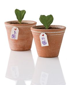 """Very original V-day gift. """"All it takes to propogate African violets is a large health leaf, cut in half."""" You can snip the leaf into the shape of a heart. Aww."""