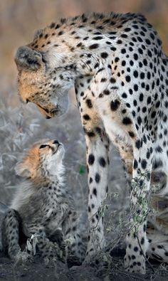 A mother's love • Photo: Todd Gustafson on Wordpress