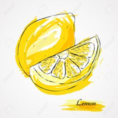 Hand Drawn Vector Lemon Citrus Fruit, On Light Background Royalty ...