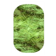 My newest nas design 'Woodland Ferns'  https://dlaity.jamberry.com/us/en/shop/products/nas-1432747?originUri=/us/en/shop/shop/for/nail-art-studio