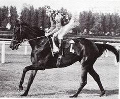 Carnauba(1972)(Filly) Noholme II- Carnival Queen By Amerigo. 4x5 To Hyperion, 5x5 To Phalaris. 14 Starts 8 Wins 4 Seconds 2 Thirds. $96,142. Won Oak D'Italia(Ity-1), Premio Chiusura(Ity-2), Criterium Di Roma(Ity-3), Fred Darling S(Eng-3), Premio Del Piazzale (Ity), Premio Seregno(Ity).